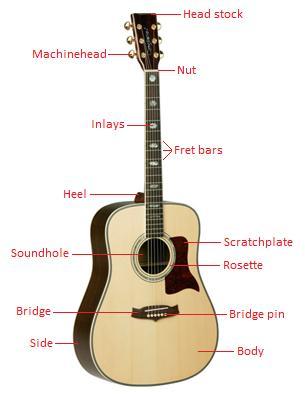 Anatomy of the guitar